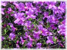 2008_spring19