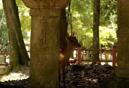 Nara2008summer11