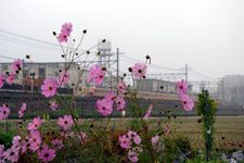 Shimamoto04