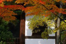 2008_momiji02
