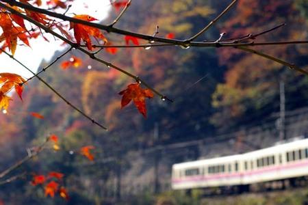 2008_momiji_11