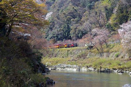 2009_hozu_sakura02