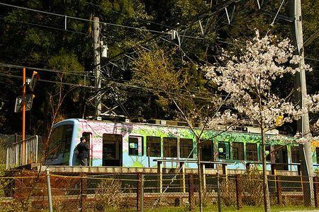 Sakura2009_04