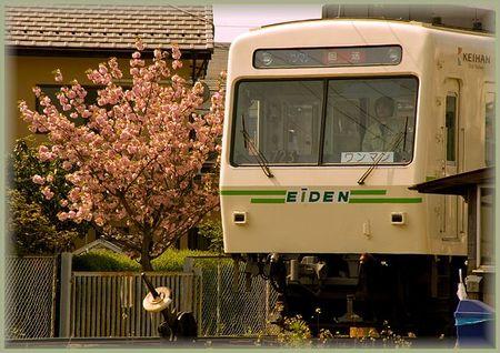 Sakura2009_26