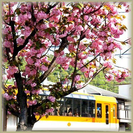 Sakura2009_27
