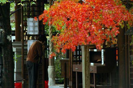 Higashiyama_momiji2009_02