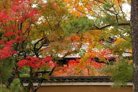 Higashiyama_momiji2009_09_2