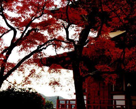 Yase_momiji2009_07