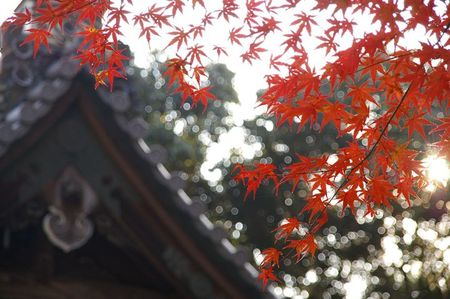 Sekizan_momiji2009_05