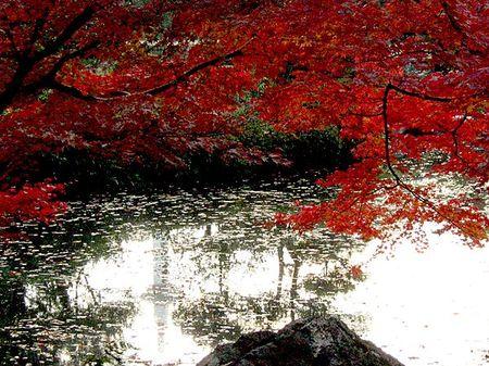 Kikoku_momiji2009_11