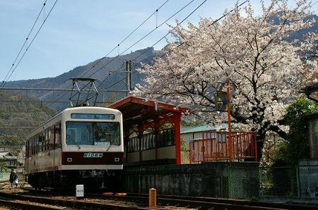 Sakura2010_01