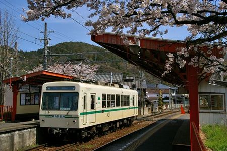 Sakura2010_06