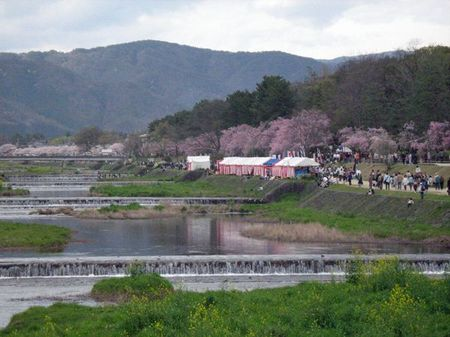 2010hanami03