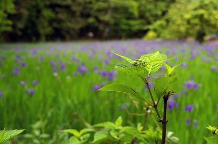 Kamigamo201005_04