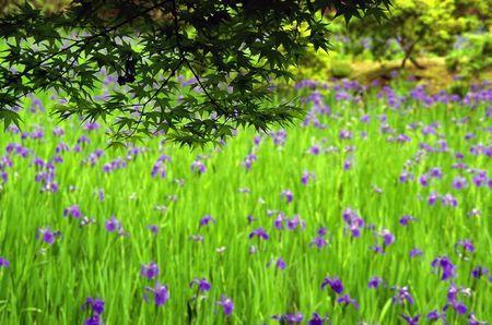 Kamigamo201005_05