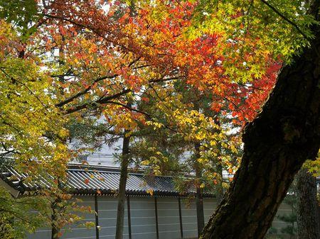 1107_arashiyama01