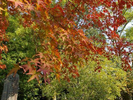 1107_arashiyama02