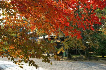 1107_arashiyama03