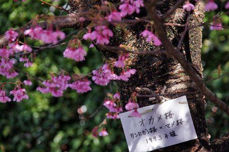 Sakara201103_03