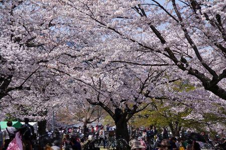 Arashiyama1303