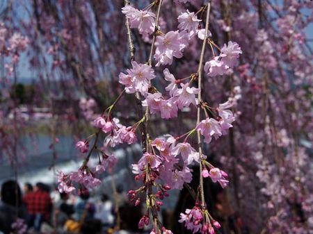 Arashiyama1304