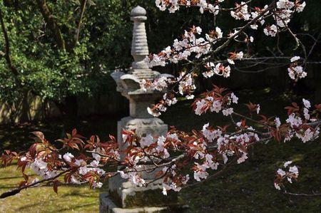 Arashiyama1311