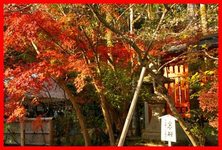 Sekizan_momiji2009_09
