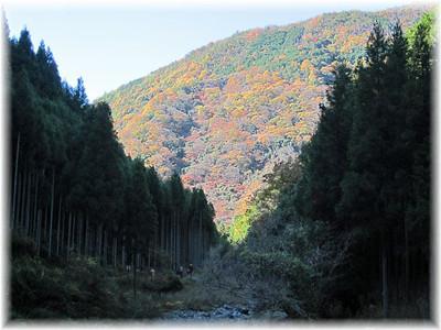 201211arashiyama08