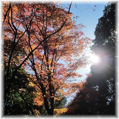 201211arashiyama11