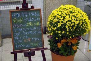 Kikunohana01_1