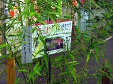 Tanabata03