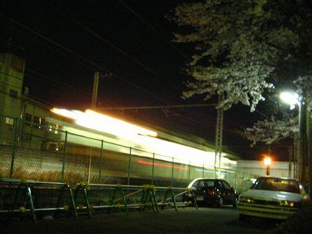 2007_sakura01