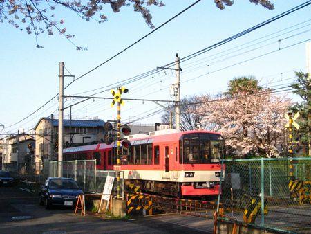 2007_sakura04