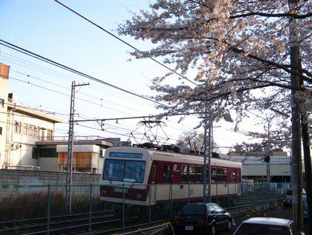 2007_sakura05
