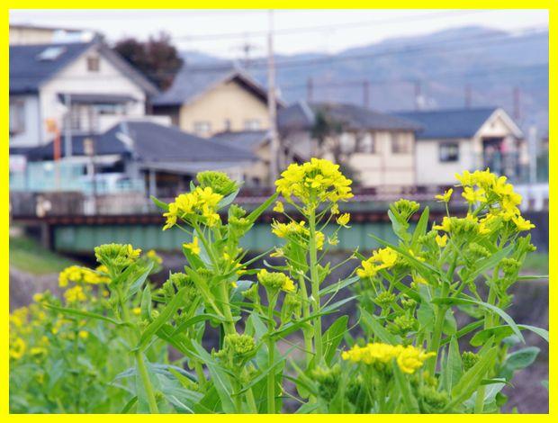 2012032iwakura20