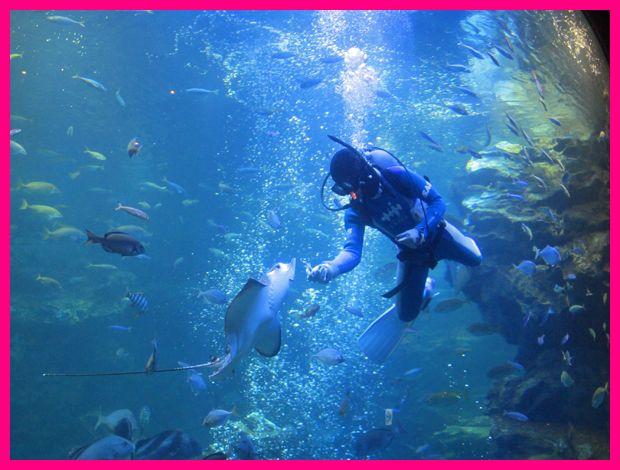 201203kyoto_aquarium07