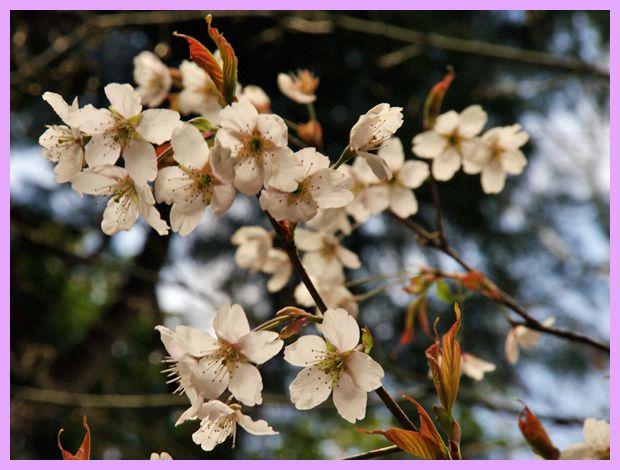 201204_arashiyama04