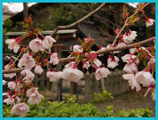 201204_arashiyama05