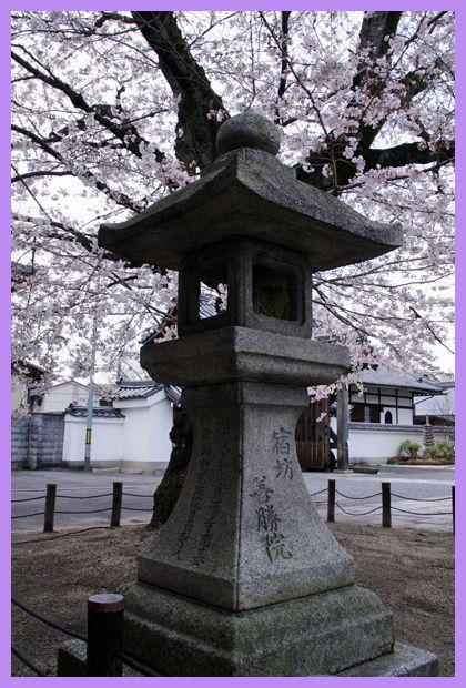 201204demachi_sakura08