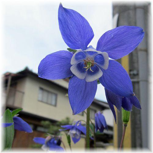 Ichihara06