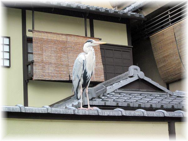 201205higashiyama12