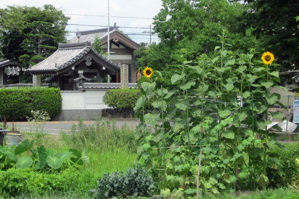201107yamashiro17
