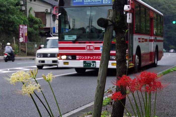 Kujyoyama01