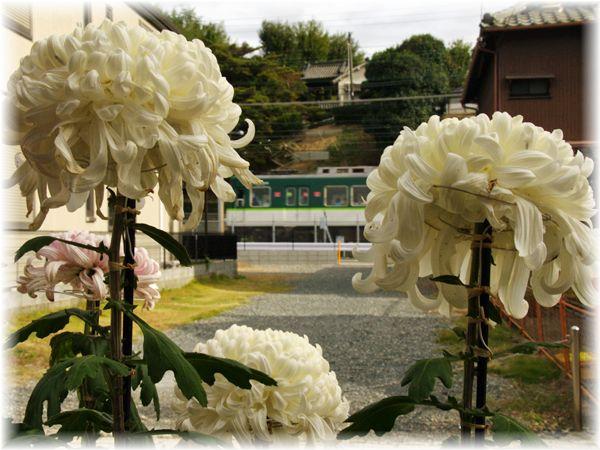 201211_hirakata13