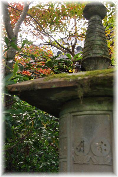 201211_yawata06