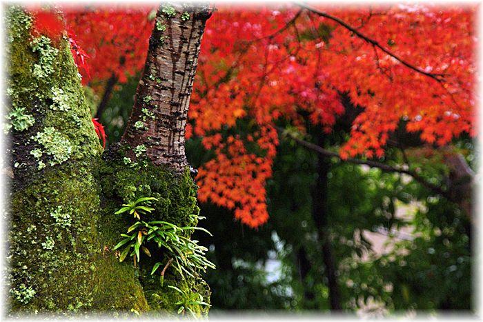 201211_2iwakura06