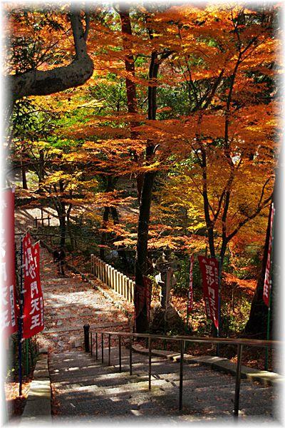 201212_1yamashina02