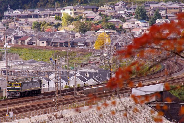 Yamashina11