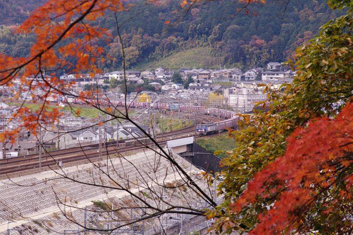 Yamashina16