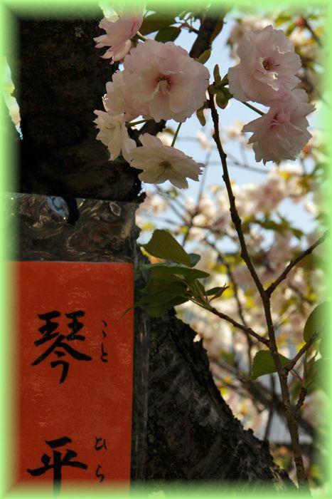 201304nishijin2_10
